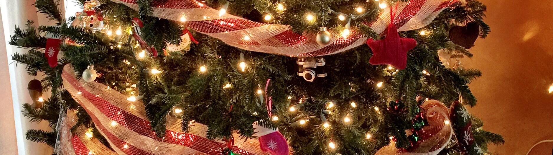 December 1: Tree